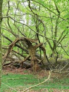 Naturen omkring Jenle